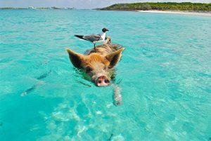 Paddle surf en Bahamas